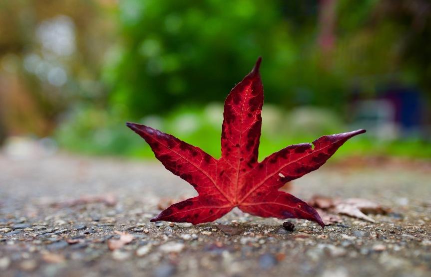 Fall has fallen…..